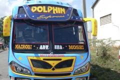 Dolphin-2015c.jpg